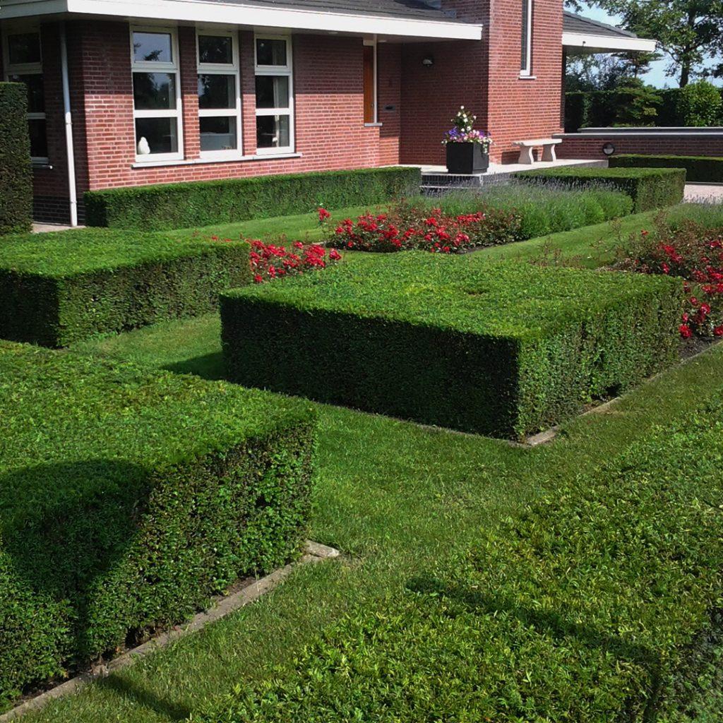 Aanplant service, beplanting, tuinonderhoud, kwekerij en tuinaanleg. Bij Gerards tuinplanten zorgen wij dat uw tuin weer groen word vanuit Zevenbergschen Hoek.