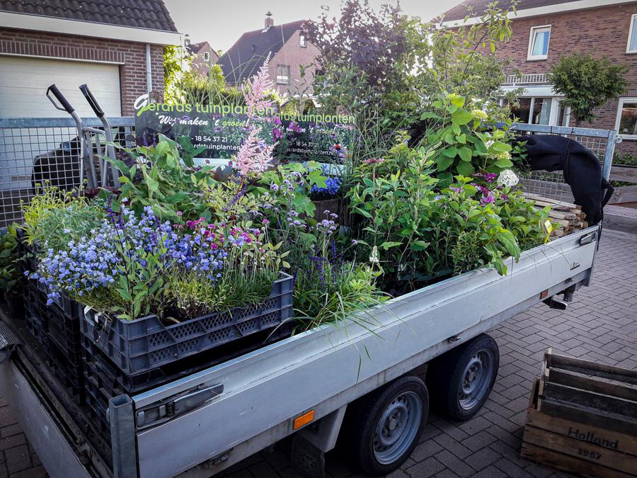 onze-plantenkwekerij-gerards-tuinplanten